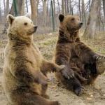 Bears Reservation from Zarnesti 01